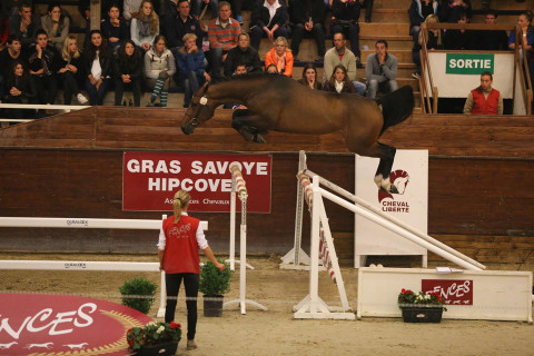 Top Price 195 000€ for Moneymaker vd Axelhoeve at Fences Auctions