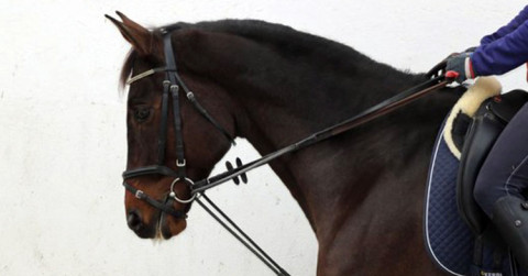 The Swiss Equestrian Federation bans the use of draw reins at horse shows in 2016